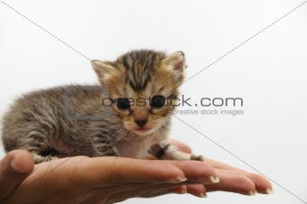 Tiny kitten - animal protection concept