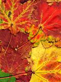 vivid autumnal colors