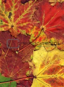 vivid autumnal colors