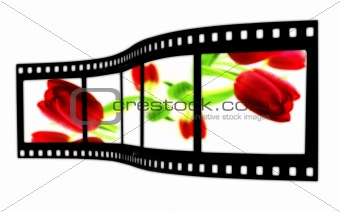 Tulip Film Strip