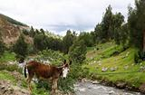 Donkey by the river