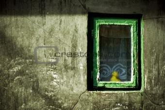 Abstract grunge image: duck-toy looking from window