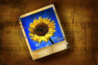 Old polaroid picture with sunflower against grunge background