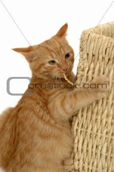 Foolish kitten