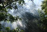 Sunlight Through Smokey Forest