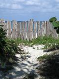 wild path to the beach