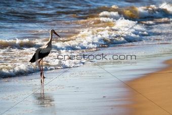 White stork in beach