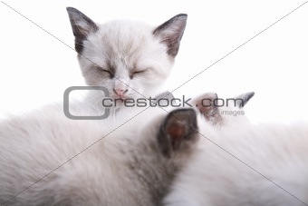 Baby Kittens Sleeping