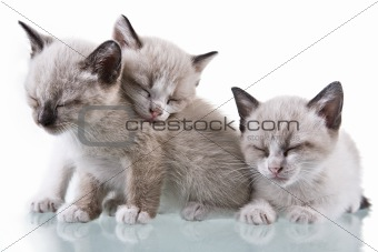Three adorable kittens sleeping