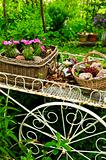 Flower cart in garden