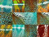 collection of twelve colorful reptile skin