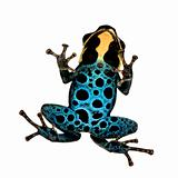 Poison Dart Frog - ranitomeya amazonica or Dendrobates amazonicu