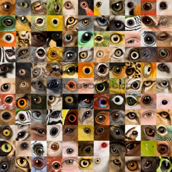 patchwork of 121 animal and human eyes