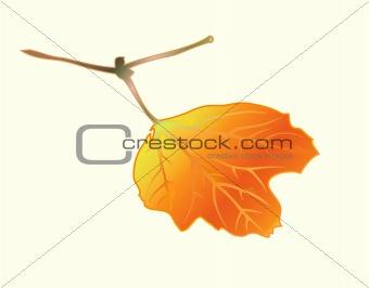 Àutumnal leaf