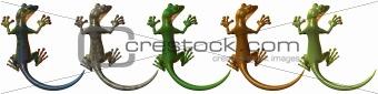Toonimal Gecko