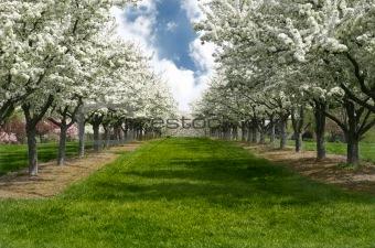 Apple Blossom Lane