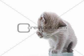 Baby Kitten Grooming