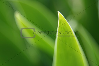 Abstract Bright Green Leaf