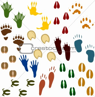 Fourteen Sets of Animal Tracks