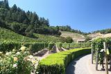Napa winery