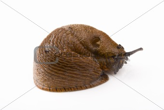 a slug on white background