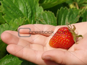 first strawberry 1