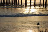 Pismo Beach Sunset Through the Pier
