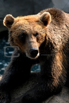 Bear in Grizzly Mood