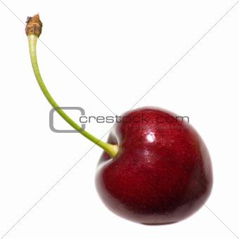 single cherry isolated on white