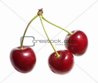 single cherry isolated on white