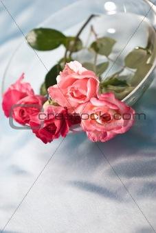 fragility roses