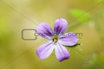 small pink flower macro