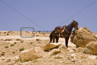 Desert Horse