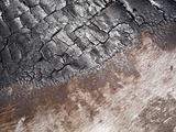 Burnt Tree Bark
