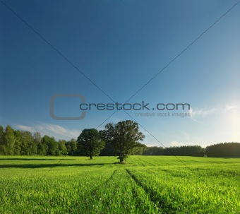 Greenfield, forest and tree with perfect skyline.